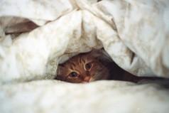 Шла по улице, нашла кучу денег! Судорожно распихала пачки по карманам. Проснулась - все одеяло в трусы заправлено.