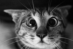 Вот говорят, хорошо иметь собаку или кошку - все непонятные шумы в квартире можно списать на них. Как же было жутко, когда, услышав непонятный шорох в соседней комнате, мы с котом переглянулись!