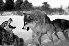 Настоящий друг с тобой, когда ты не прав. Когда ты прав, всякий будет с тобой.