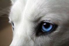 Волк - слабее Льва и Тигра. Но волк, в цирке не выступает.