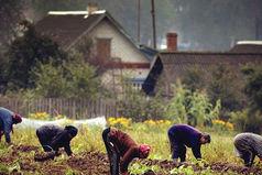 В мире есть всего лишь одна сила,  которая способна поставить Россию раком - это картошка