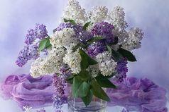 Поздравляю с 1 мая, с майским праздником весны. Я добра вам всем желаю, мира, счастья и любви.