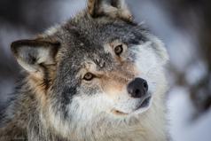 И волки сыты, и овцы целы, и пастуху вечная память