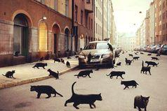 Чёрный кот, перебегающий вам дорогу, он просто куда-то идёт. Не усложняйте.