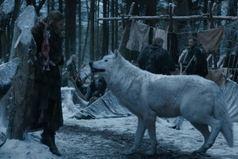 Затруднительно чувствовать себя уверенным, когда тебя со всех сторон окружают волки лошадиного размера!