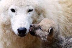 Никогда не забывай любить маму.