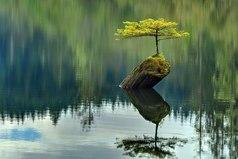 Покой в душе зависит — от мыслей в голове. Ваша жизненная ситуация не является проблемой, проблемой является то, что вы думаете о вашей — жизненной ситуации…