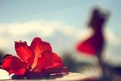Никогда не теряйте надежды и веры в лучшее, потому что после самой черной ночи всегда бывает светлый день и даже после самого сильного ливня ярко светит солнце.