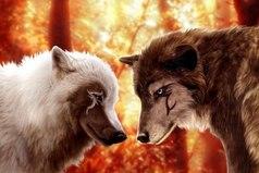 Волк никогда не бросит свою любимую волчицу, ради доступной собаки.