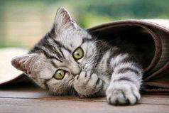Если на душе скребутся кошки, не вешай нос, придёт время и они будут мурлыкать от счастья!