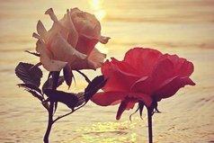 Иногда хватает мгновения, чтобы забыть жизнь, а иногда не хватает жизни, чтобы забыть мгновение.