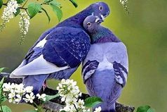 От зависти люди стареют. От обиды болеют. От злости тупеют. А от любви молодеют. Любите и будьте любимыми!