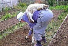 Люди созданы для того,чтобы котам было с кем жить.