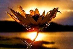 Сердце - как цветок: его нельзя открыть силой, оно должно раскрыться само.
