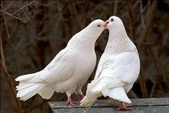 Главный закон любви — быть верным своей половинке!
