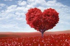 Не красота вызывает любовь, а любовь заставляет нас видеть красоту.