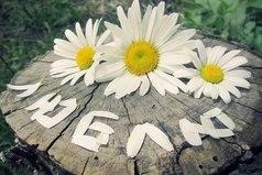 Хочу проснуться утром, а рядом на подушке лежит букет ромашек, и записка: «Не мучай цветы - Любит - Не любит?… Люблю и очень сильно!»