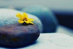 В жизни нет ничего сложного. Это мы сложны. Жизнь - простая штука , и в ней - чем проще, тем правильнее.