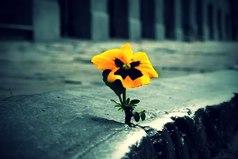 Мир делится на два класса - одни веруют в невероятное, другие совершают невозможное.