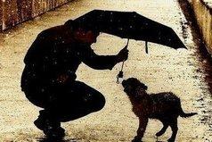 Единственное правило в жизни, по которому нужно жить – оставаться человеком в любых ситуациях.