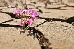 Как бы трудно Вам ни было - не меняйте красоту своей души на мертвый холод камня! Даже если Вас сломали - прорастайте заново!