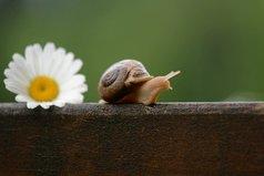 Не важно, каким путём ты идёшь. Важно совсем другое. Счастлив ли ты, проходя его?