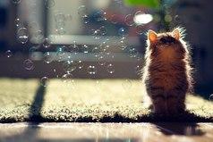 А я верю в чудеса... Так мне гораздо приятнее жить!