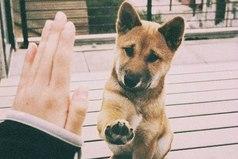 Собаки способны любить больше, чем некоторые люди.