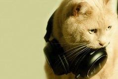 Музыка существует не для того, чтобы спасти мир. Она существует для того, чтобы спасти твою жизнь.