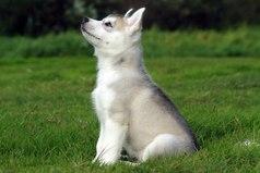 Собака - это единственное существо на земле, которое любит тебя больше, чем себя.