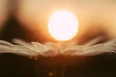 Каждый закат делает нашу жизнь на один день короче, но каждый рассвет продлевает нашу жизнь на один день веры и надежды.