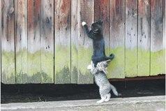 Поистине нет в жизни ничего лучшего, чем помощь друга и взаимная радость.