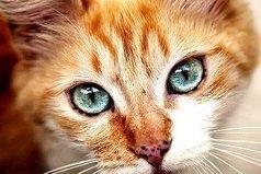 Всегда найдется кто-то, кому не нравится то, что ты делаешь. Это нормально. Всем подряд нравятся только котята.