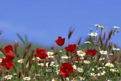 В мире нет ничего более привлекательного, чем естественность...