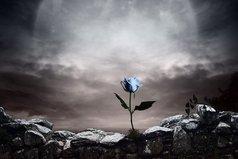 Каждый захочет красивую розу, красивую ночь, хорошего друга. Важно уметь любить розу вместе с ее шипами, ночь с ее таинственностью, друга со всеми его проблемами.