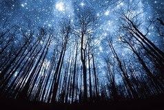 Любуйтесь звездами, но при этом твердо стойте на земле...