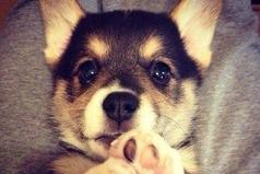 Купить собаку - это единственный способ купить любовь за деньги.