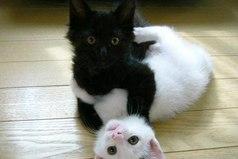 В жизни нет ничего невозможного. Даже черное с белым прекрасно совмещаются и составляют единое целое.