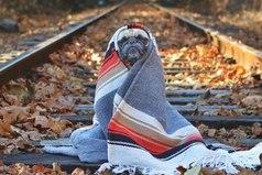 Доктор, у меня аллергия на осень. Я весь покрываюсь одеялом и всё время сплю.
