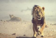 Каждое утро в Африке просыпается газель. Она должна бежать быстрее льва, иначе погибнет. Каждое утро в Африке просыпается и лев. Он должен бежать быстрее газели, иначе умрет от голода. Не важно, кто ты — газель или лев. Когда встает солнце, надо бежать.