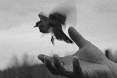 Чем больше решений вы вынуждены делать в одиночку, тем больше вы знаете о собственной свободе выбора.