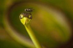Если друг мой дружит с моим врагом, то мне не следует водиться с другом. Остерегайся сахара, который смешан с ядом, берегись мухи, которая сидела на дохлой змее.