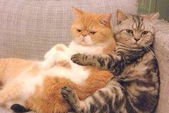 Счастье - это когда есть кого на диванчике поняшкать...