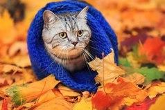 Осень — не повод грустить! Осень — это повод носить шарфик!
