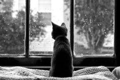 Счастье – это когда ты идешь домой и знаешь, что тебя там ждут.