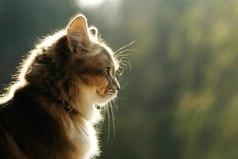 Многие люди похожи на одичавших котов. С виду такие важные, независимые и грозные, но всегда мурлычут, радуясь тому, что кто-то отважился их приласкать.