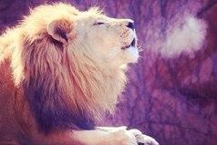 Момент терпения в минуту гнева, предотвращает тысячи моментов сожаления.