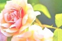 Нежность - лучшее проявление любви, чем самые страстные клятвы...