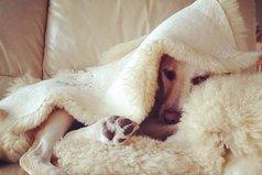 Хочу спрятаться от осени в одеялке!