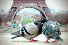 Париж - город любви не только для людей.